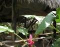 Vrindavan Rio Negro 8 febr (33)