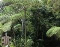 Vrindavan Rio Negro 8 febr (68)